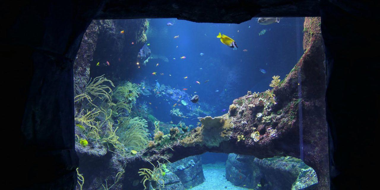 Idée de sortie : l'Aquarium de Biarritz